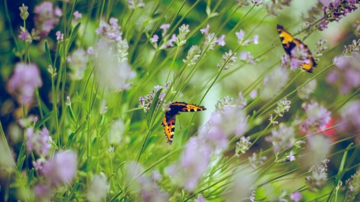 Confinement : que peut-on faire au jardin ?