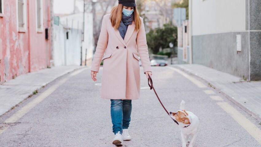 Les associations de protection des animaux inquiètes devant l'augmentation des demandes de location de chiens