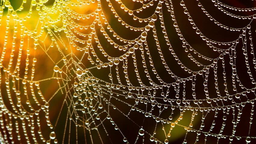 Tout savoir sur l'araignée