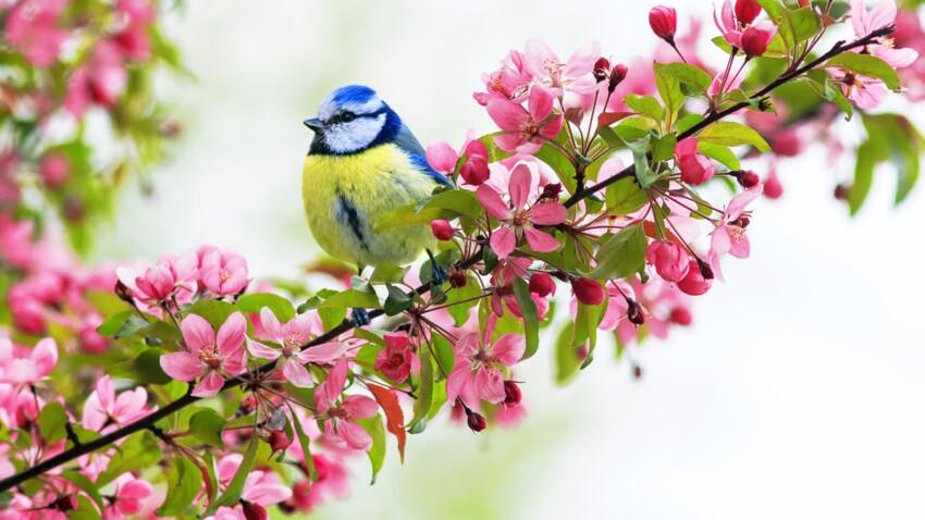 Participez au recensement des oiseaux !