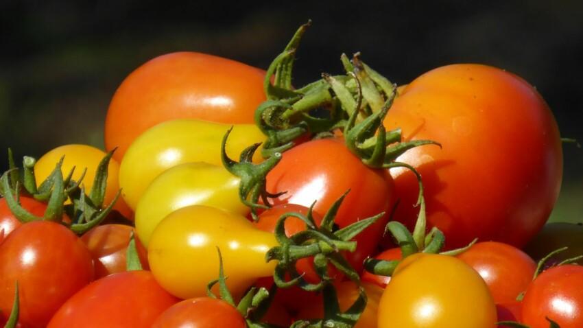 Origines, usages : 6 infos que vous ignorez sur la tomate