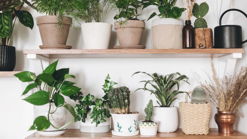 Comment prendre soin de mes plantes vertes pendant le confinement ?