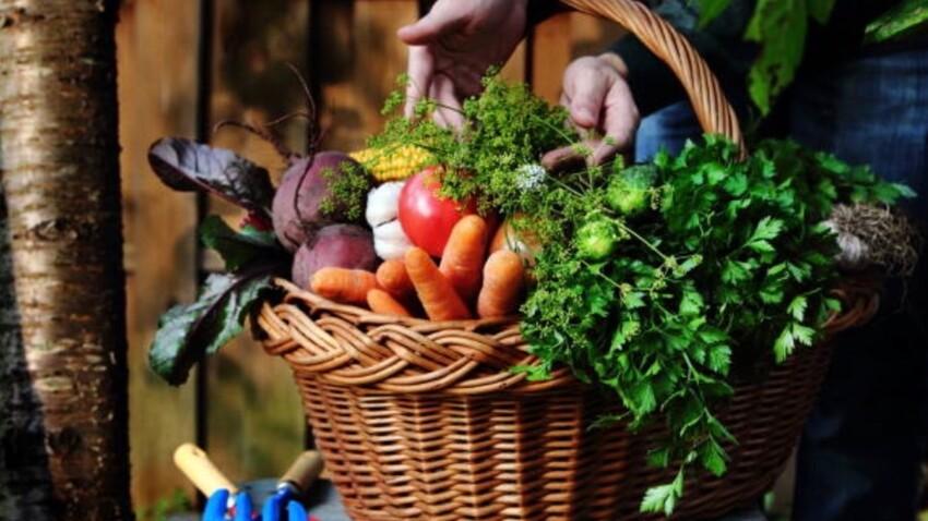 10 fruits et légumes à cultiver à la maison, sans jardin