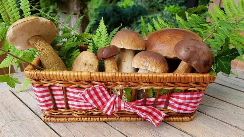 Champignons : 8 variétés à (re)découvrir
