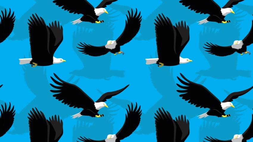 Horoscope amérindien : portrait du clan de l'Oiseau-Tonnerre, le clan de l'élément Feu