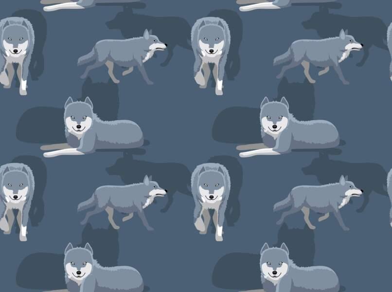 Le Cougar ou le Loup (19 février - 20 mars)
