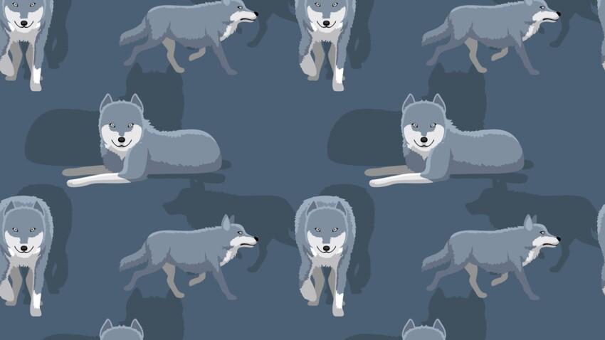 Le Cougar ou le Loup (19 février - 20 mars) : votre signe amérindien correspond à la Lune des Grands Vents