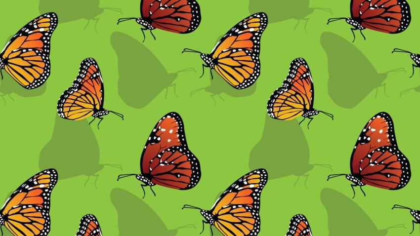 Horoscope amérindien : portrait du clan du Papillon, le clan de l'élément Air
