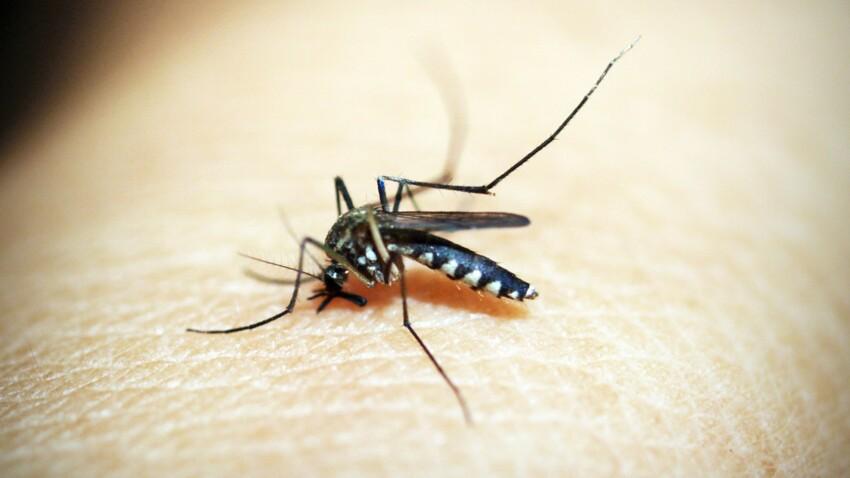 Moustique tigre : les méthodes efficaces pour s'en débarrasser sans insecticides