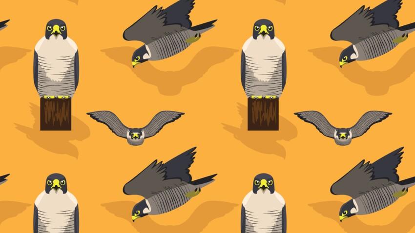 Le Faucon saure (21 mars - 19 avril) : votre signe amérindien correspond à la Lune des Arbres en Bourgeons