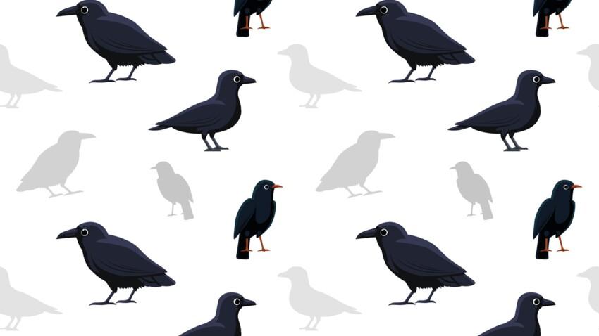 Le Corbeau (23 septembre - 23 octobre) : votre signe amérindien correspond à la Lune du Vol des Canards