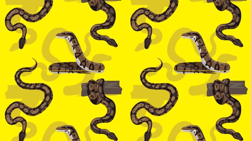 Le Serpent (24 octobre - 21 novembre) : votre signe amérindien correspond à la Lune du Gel