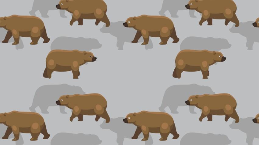 L'Ours brun (23 août - 22 septembre) : votre signe amérindien correspond à la Lune de la Moisson