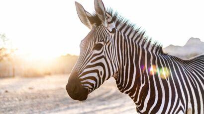 site de rencontre pour les amoureux des animaux