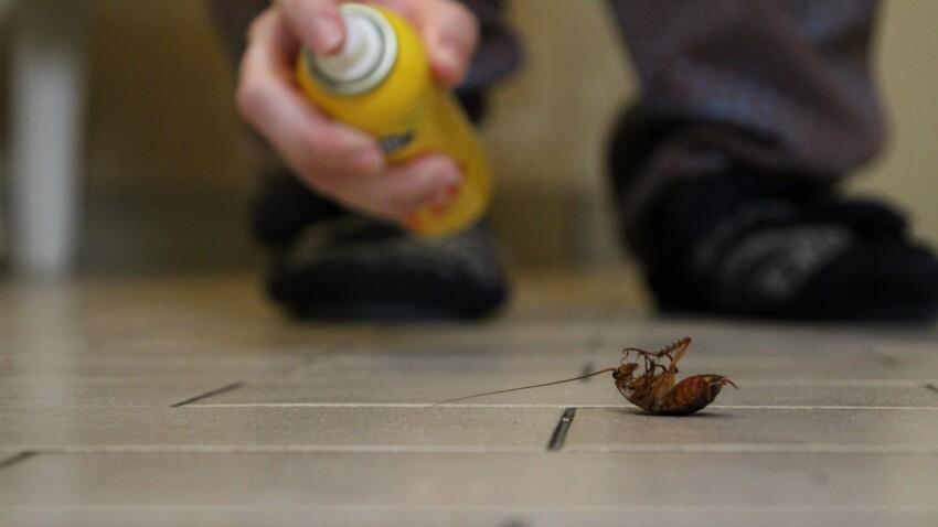 Comment faire pour se débarrasser des blattes à la maison