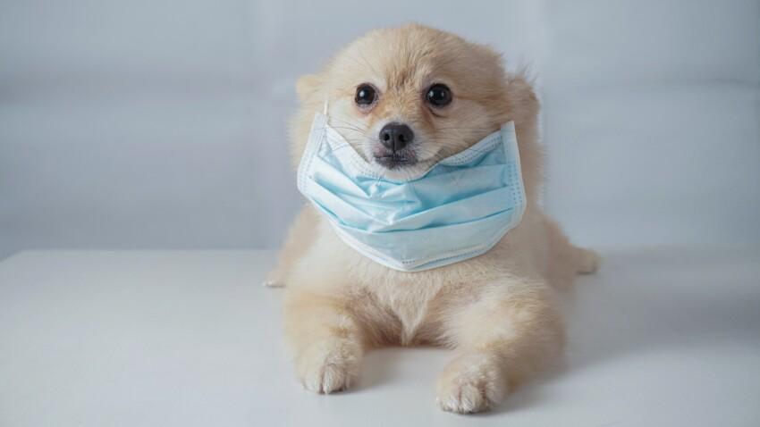 Masque de protection pour chiens : utile ou pas ?