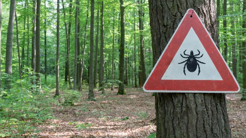 Les nids de tiques existent-ils ?