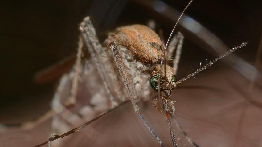 L'astuce insolite pour faire fuir les moustiques la nuit
