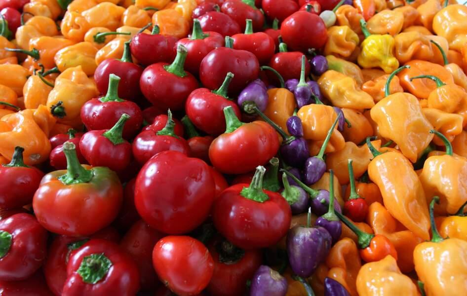 Préparer des recettes multicolores