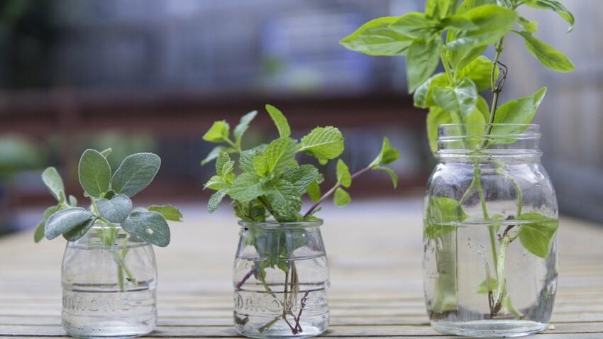 Plante aromatique : comment se créer un jardin avec des herbes ?