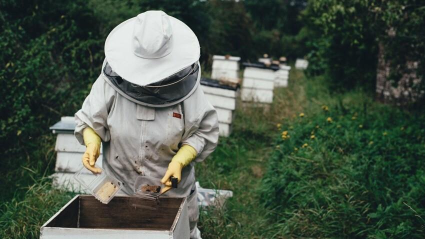 Tout savoir sur le métier d'apiculteur