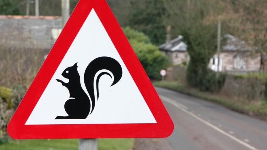 Animaux écrasés sur la route : quelles sont les espèces les plus menacées ?
