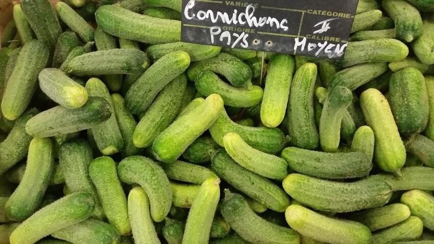 Cornichon : tout savoir pour bien le planter