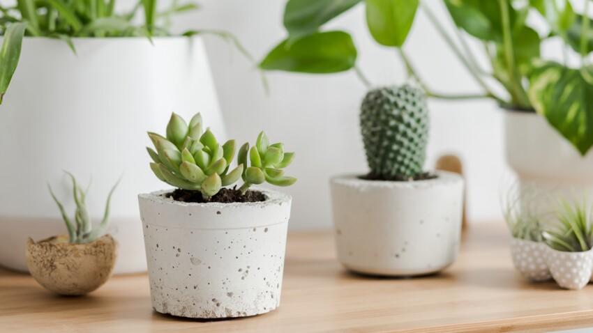 Succulentes : comment entretenir ces plantes grasses ?