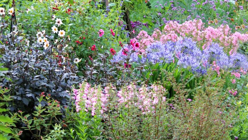 Quelles plantes vivaces pour mon jardin ?