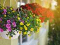 5 plantes pour un balcon fleuri