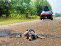 Abandon et maltraitance animale : le triste record français