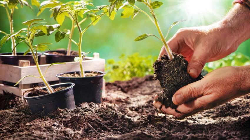 Troc de légumes, graines ou palette de bois gratuites... Des bons plans pour votre jardin