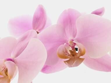 Orchidée : tout ce qu'il faut savoir sur cette fleur