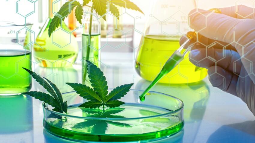 Cannabis thérapeutique, une médecine fumeuse ?