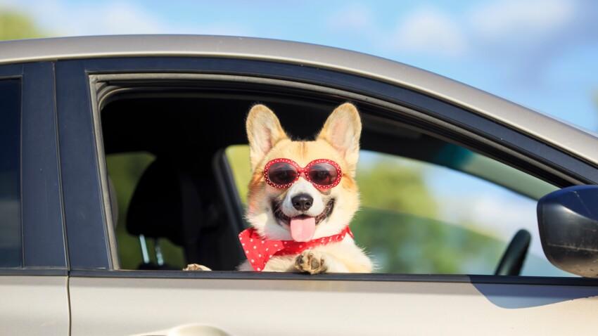 Découvrez GetPet, le Tinder pour adopter des chiens abandonnés