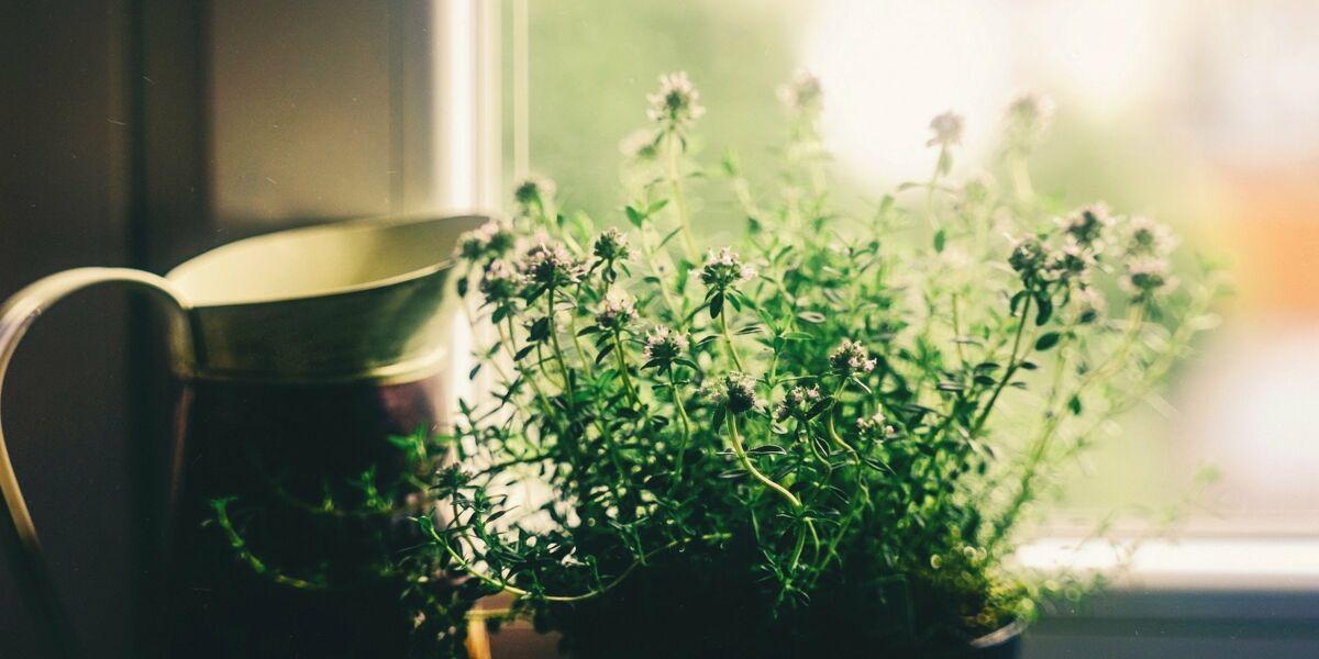 Jardin Médicinal Comment Se Soigner Avec Les Plantes De La Maison Et Du Jardin Femme Actuelle Le Mag