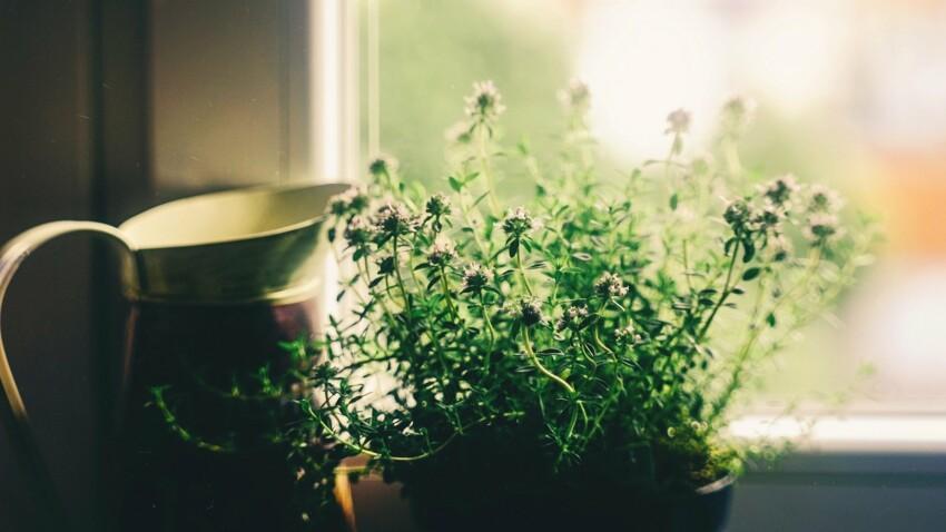 Jardin médicinal : comment se soigner avec les plantes de la maison et du jardin