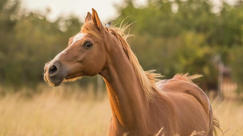 6 infos que vous ignorez sur le cheval
