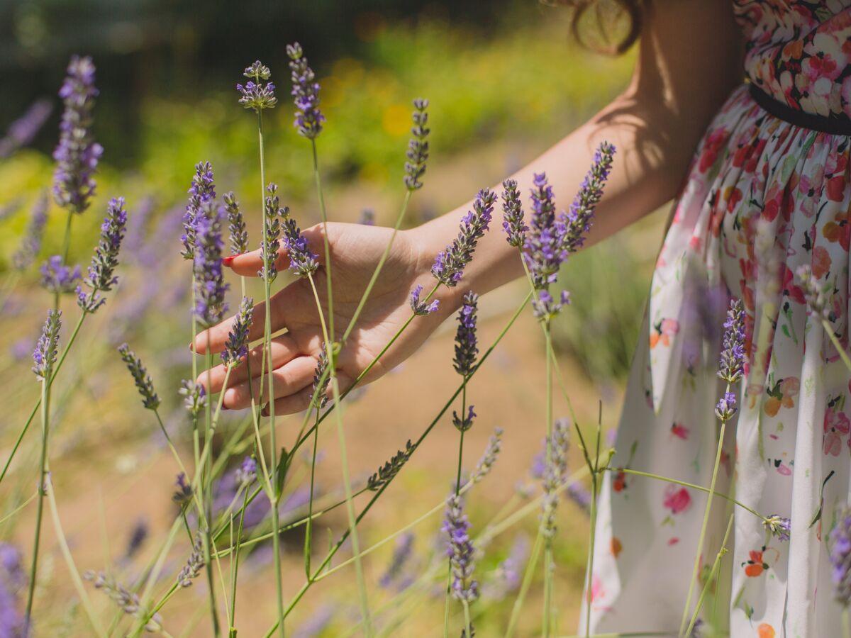 Coup De Soleil Transpiration 6 Remèdes Naturels à Réaliser Avec Les Plantes Du Jardin Femme Actuelle Le Mag