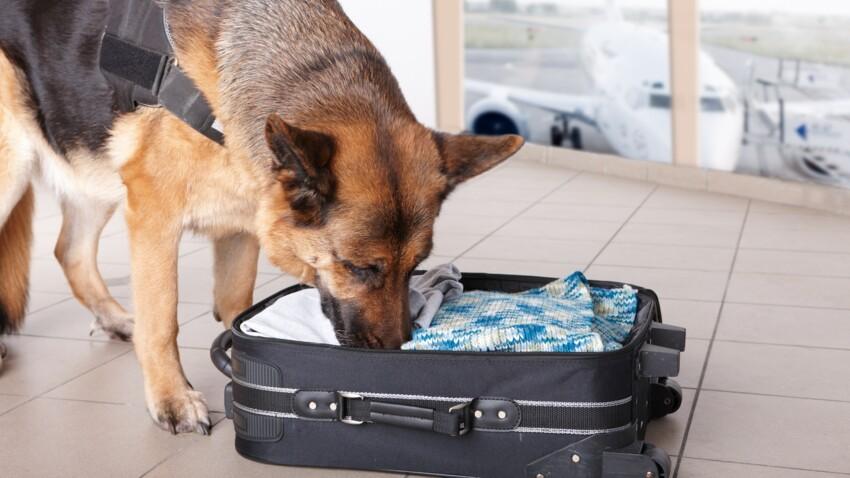 Un maire arrêté à l'aéroport d'Orly avec 2,5 kilos de cocaïne