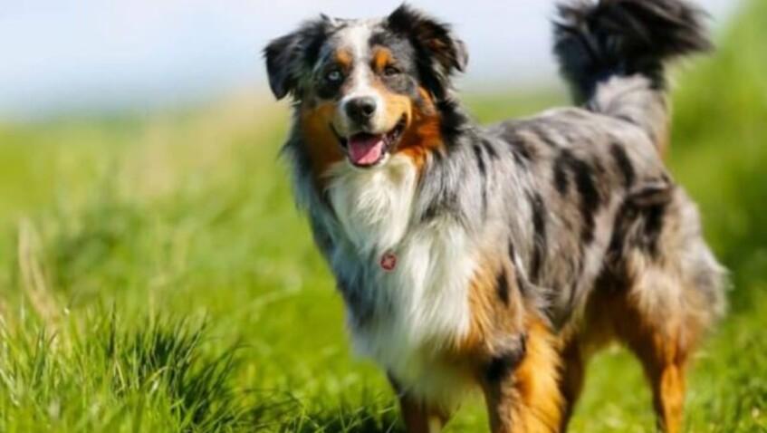 Découvrez le chien préféré des Français en 2020