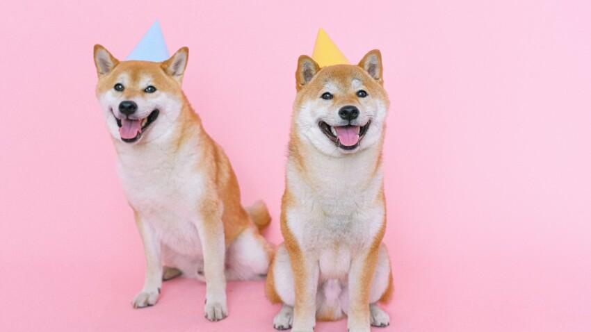 Chat, chien : le palmarès 2020 des prénoms les plus donnés