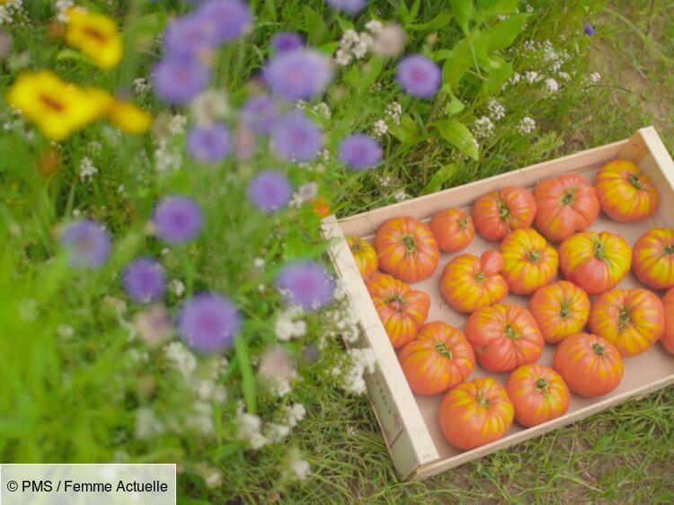 Les tomates à l'ancienne