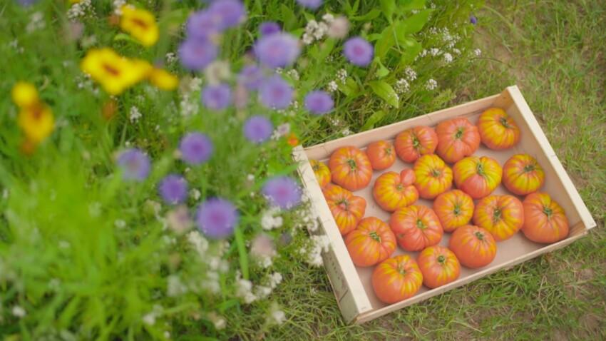 Les tomates ancienne