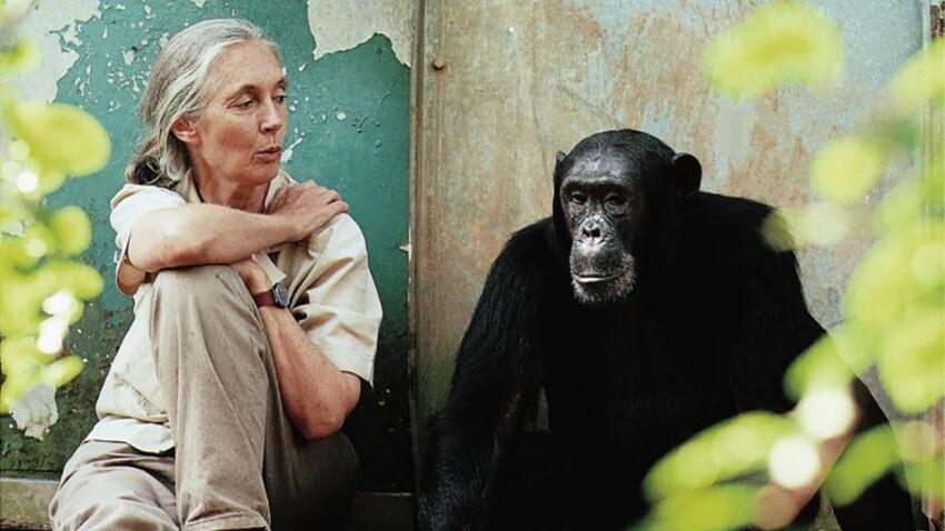 Jane Goodall : sa vie pour les chimpanzés
