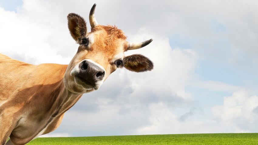 Découvrez ces lieux qui portent un nom de vache