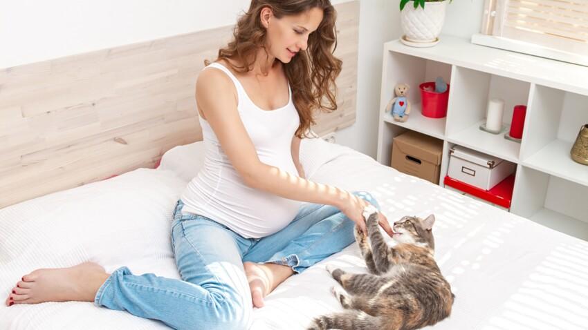 """""""Je rêve d'avoir un chat, mais..."""""""