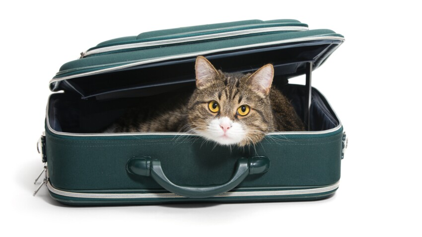 Les nouveaux modes de garde pour les chats