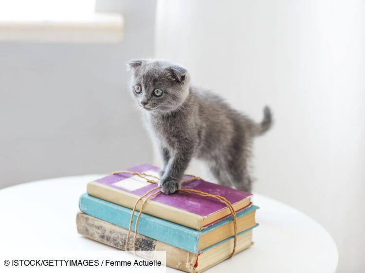 Questions pratiques et juridiques sur les chats