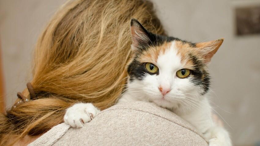 Mon chat : est-ce qu'il m'aime un peu, beaucoup, à la folie ou pas du tout ?